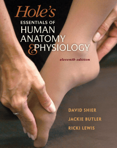 essentials of human anatomy and physiology 8th edition pdf